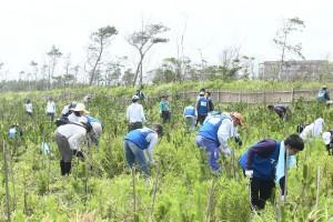 暑い夏の盛りに行う下草刈り 千葉県山武市蓮沼殿下海岸で