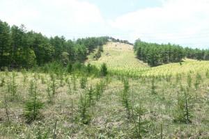 植林を終えたゲレンデ 長野県長和町 和田峠スキー場跡地