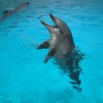 国内30以上の水族館でイルカショーが行われている
