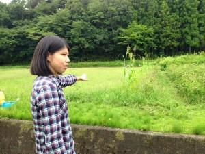 コットン畑の説明をする松本幸子さん。日本農業経営大学校で農業と地域経済の振興について学んだ