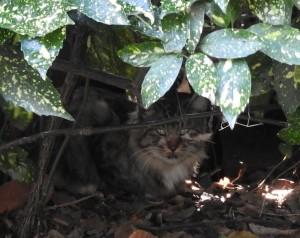 東京港野鳥公園のネコ 人が行き来する区域では、人目を避けて茂みに潜んでいる。