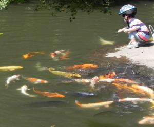 色鮮やかな錦鯉たちに餌やりする男児。その表情は輝いていた。 離れて餌にありつけないコイに気づくと、そのコイにも餌をやっていた。