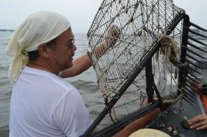 捕れたハマグリと貝