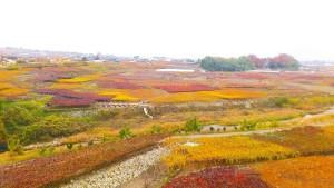 甲州市勝沼の風景 (2014年12月 筆者撮影)