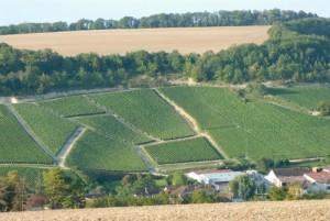 1615年以来ドラピエ家がぶどうを栽培する畑