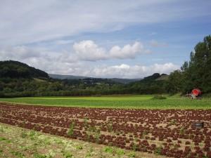 ブルガリアでは助成金を出し、有機農業を促進している Image credit:Iain Moss