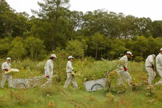 ブナの森づくりを体験する下高井農林高校の生徒たち(長野県木島平村 カヤの平高原牧場)