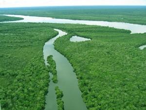 アマゾンの風景